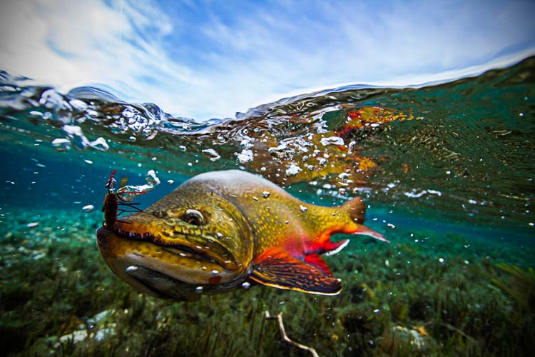 Patagonia river guides archives patagonia river guides for Fly fishing patagonia