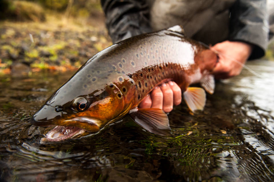 patagonia-river-guides-tres-lagos-34
