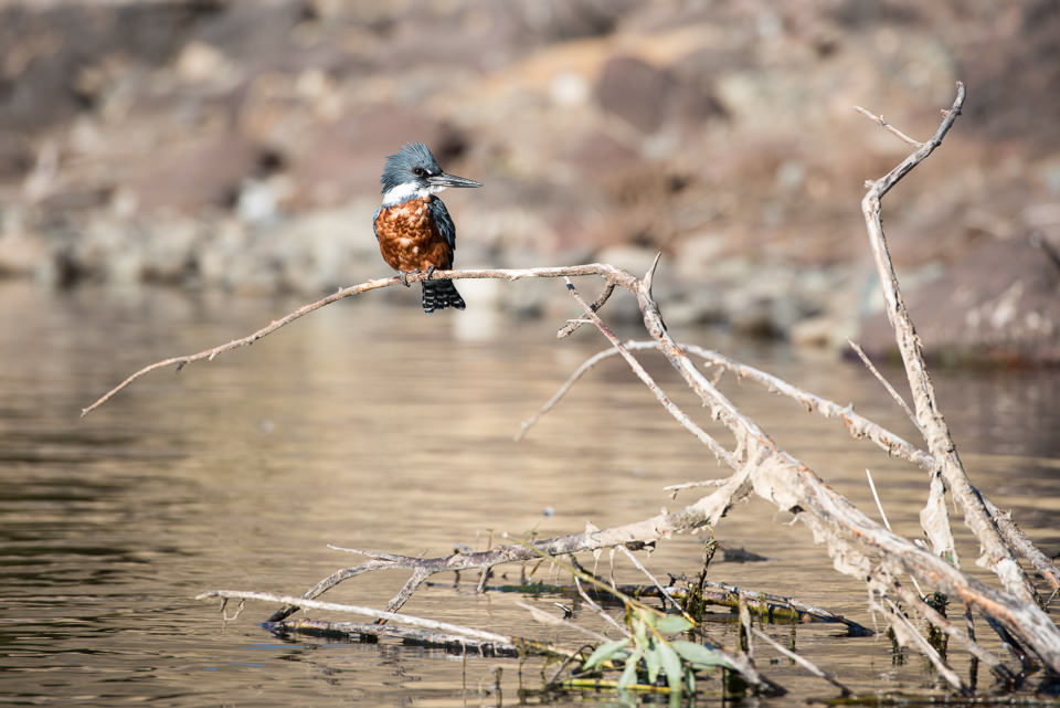patagonia river guides tres rios 81
