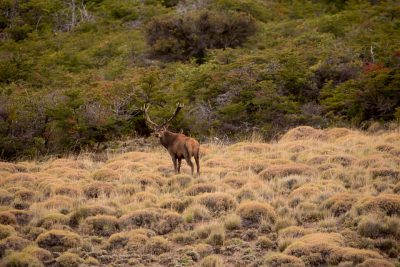 patagonia argentina stag hunting 019