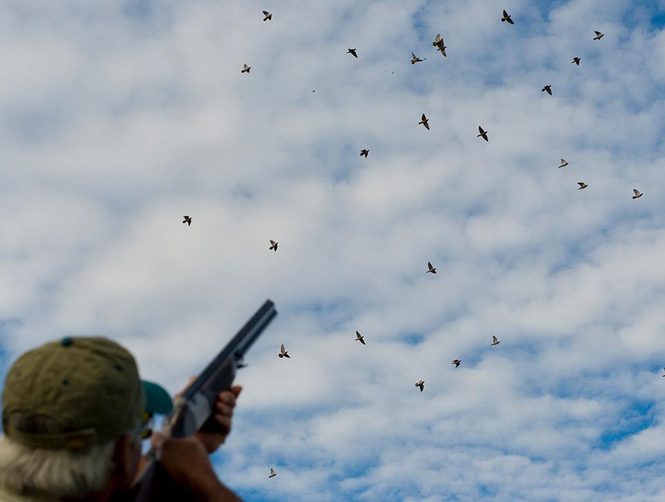 argentina dove hunting 0726