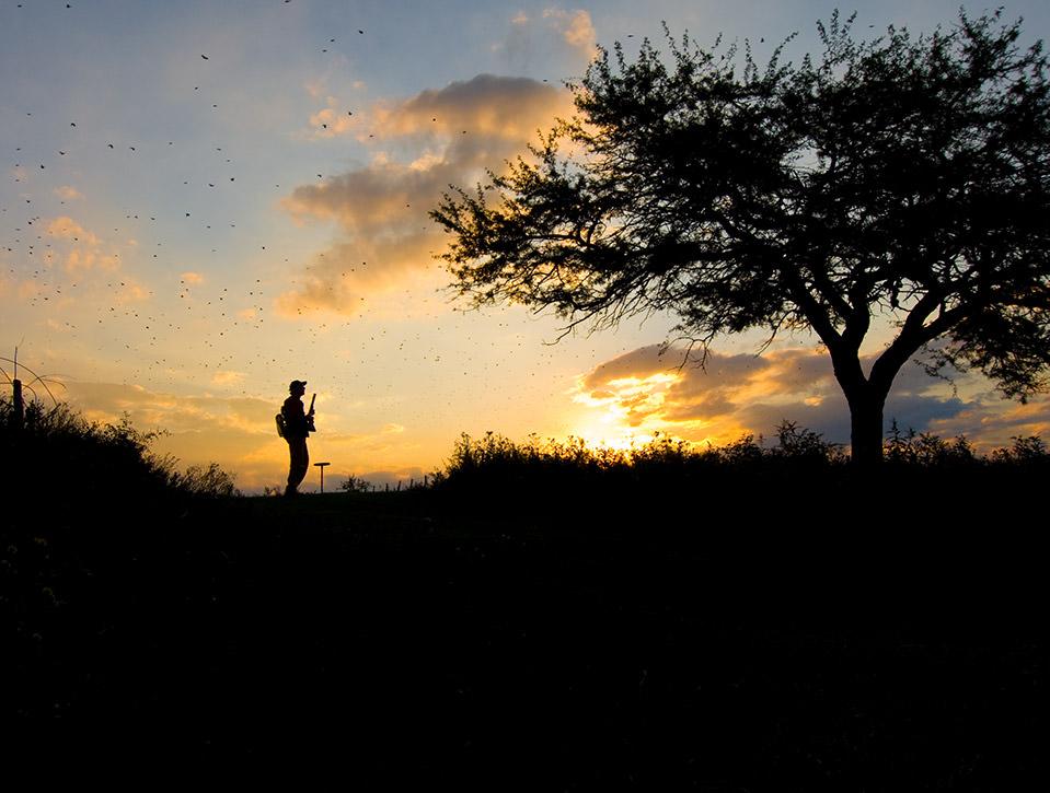 argentina dove hunting 0727