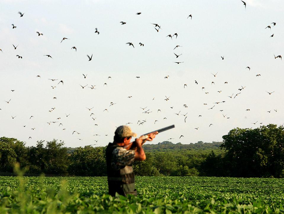 argentina dove hunting 0728