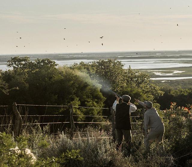 argentina dove hunting 0730