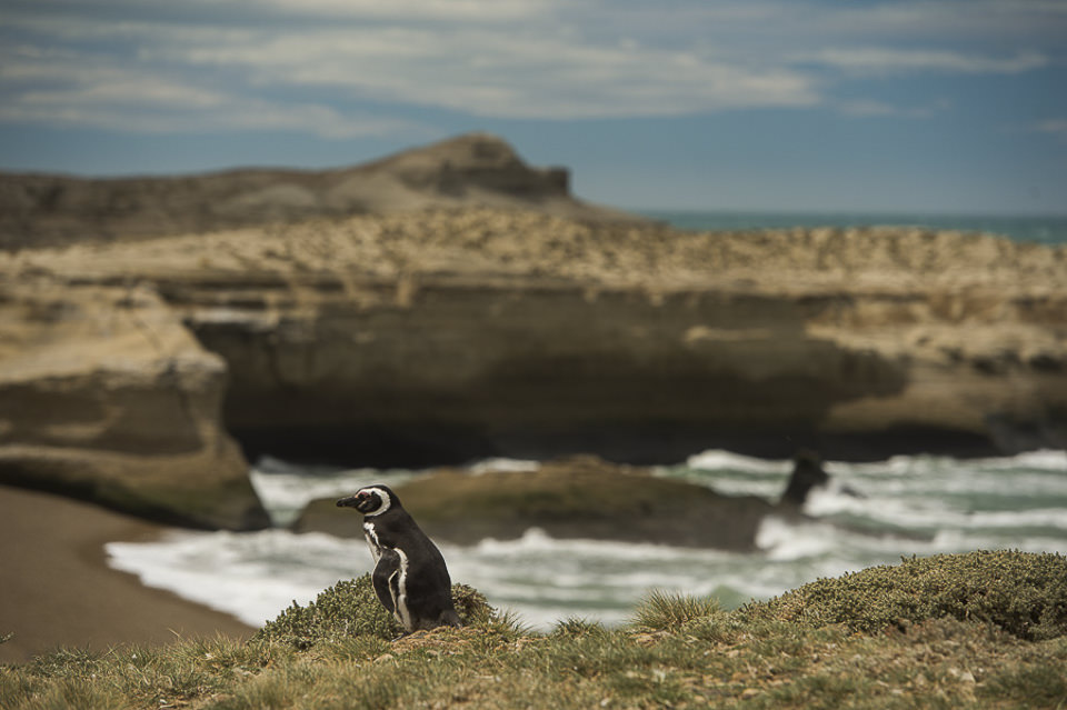 penguins argentina 0211