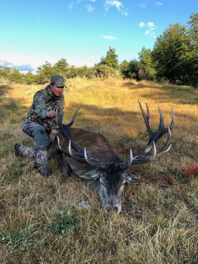 patagonia red stag
